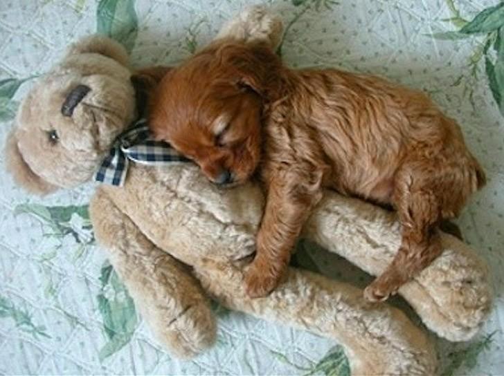 CuddlingPuppies01 Тихий час у щеночков