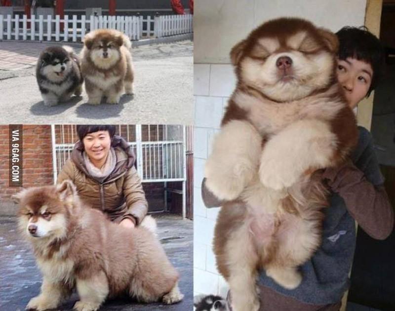 dogmixes03 Cамые необычные породы собак