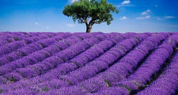Самые красивые цветочные плантации и паркимира