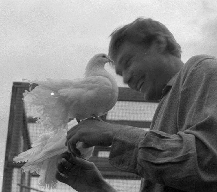 loveandpigeons43 «Любовь и голуби»: детали, факты и редкие кадры из фильма