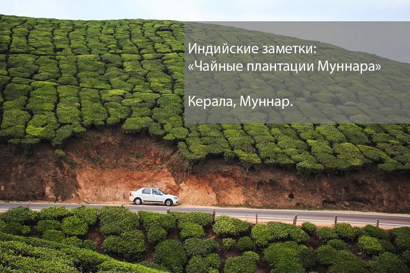 teaplantation00.jpg