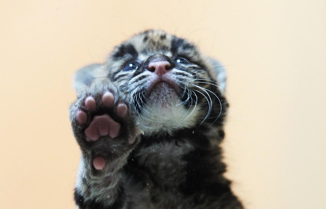 2014apr4zhivotny 22 Лучшие фотографии животных за неделю