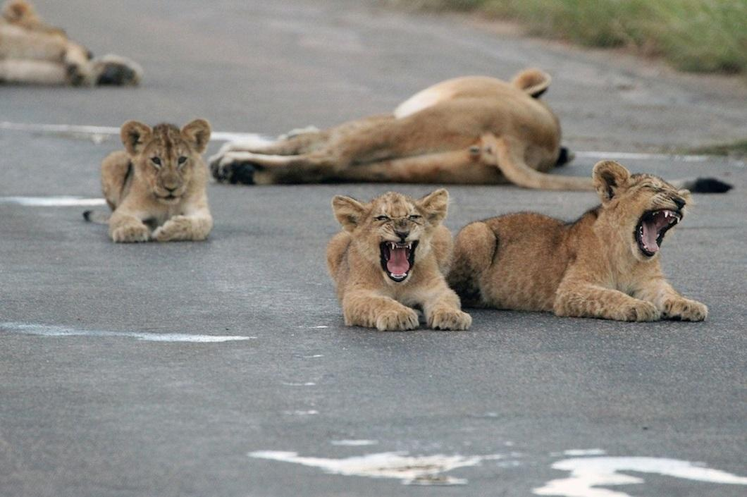 2014apr4zhivotny 27 Лучшие фотографии животных за неделю