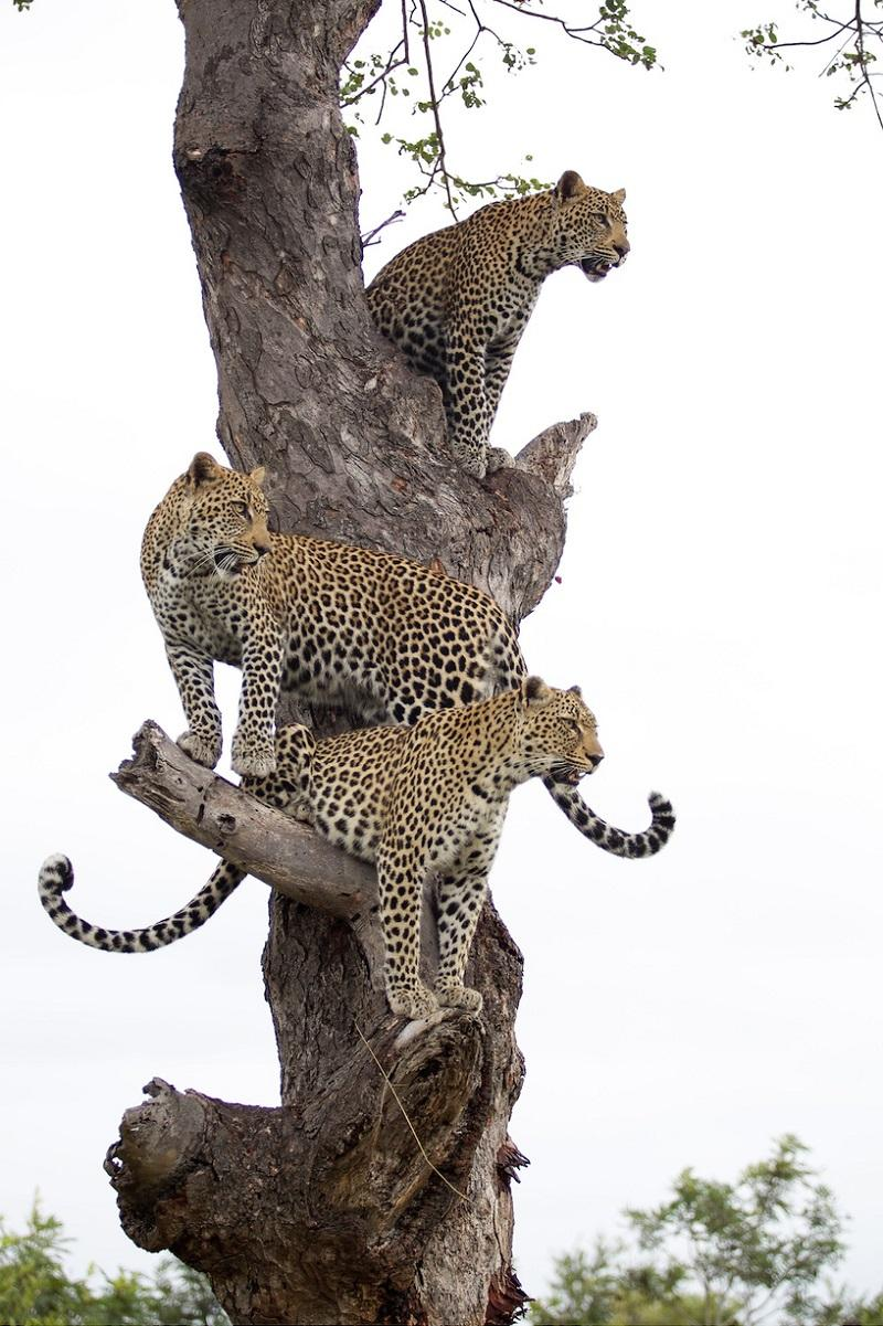 2014zhivonyeza1nedelu 16 Лучшие фотографии животных со всего мира за неделю