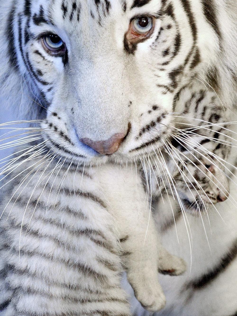 2014zhivonyeza1nedelu 2 Лучшие фотографии животных со всего мира за неделю