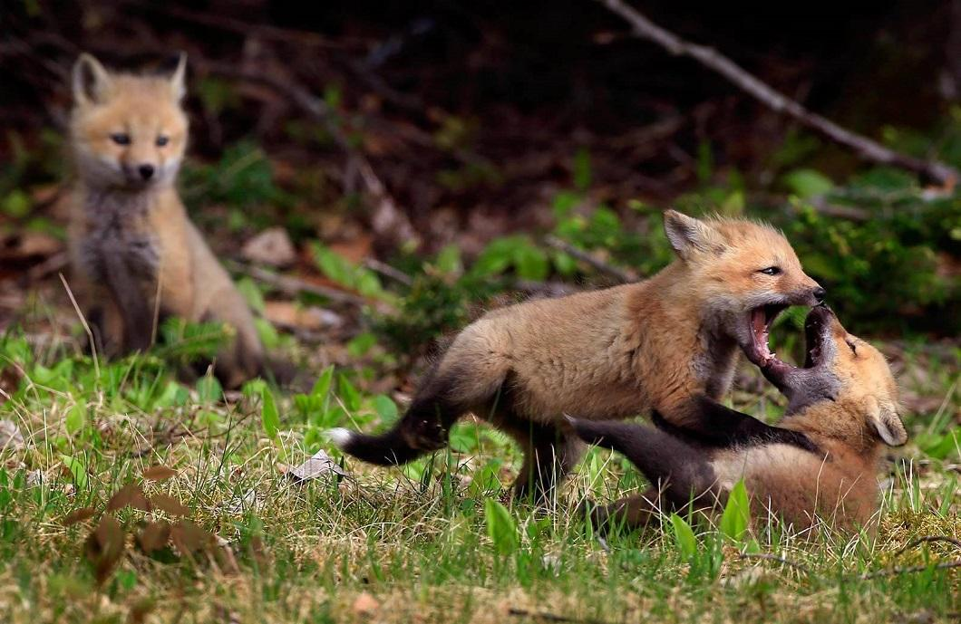 2014zhivonyeza1nedelu 23 Лучшие фотографии животных со всего мира за неделю