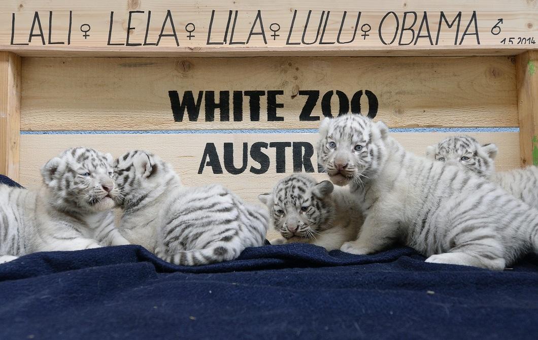 2014zhivonyeza1nedelu 3 Лучшие фотографии животных со всего мира за неделю