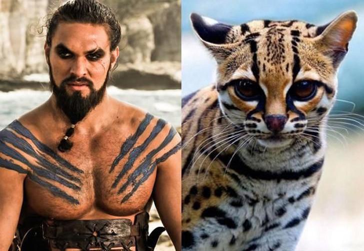 CatsofThrones01 «Игра престолов» в исполнении котов