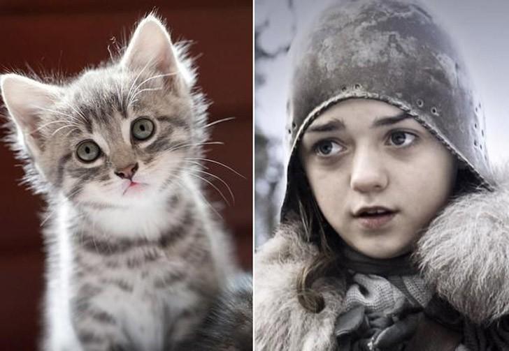 CatsofThrones02 «Игра престолов» в исполнении котов