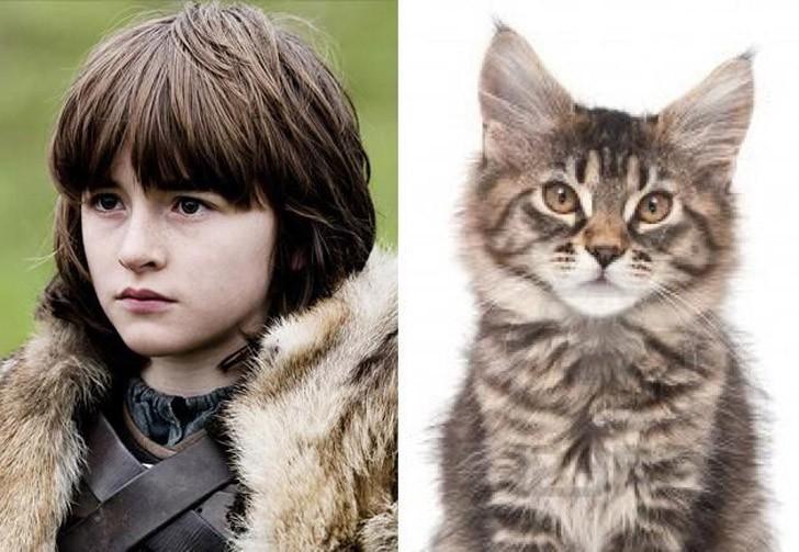 CatsofThrones03 «Игра престолов» в исполнении котов