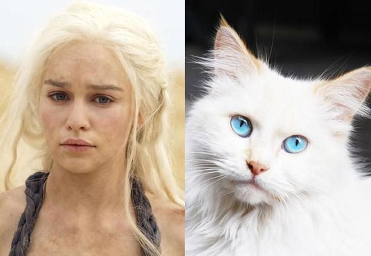 CatsofThrones04 «Игра престолов» в исполнении котов