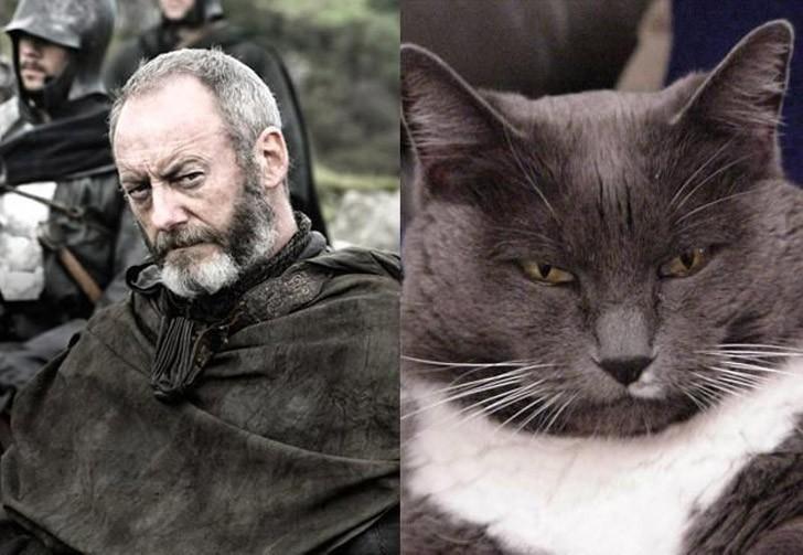 CatsofThrones05 «Игра престолов» в исполнении котов