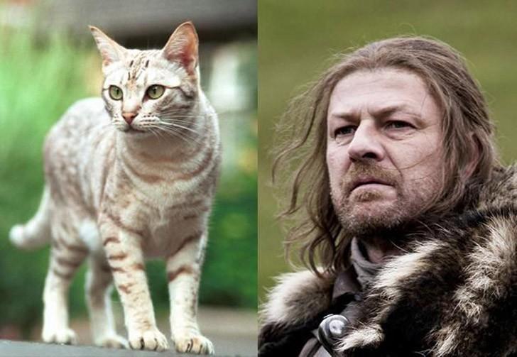CatsofThrones06 «Игра престолов» в исполнении котов
