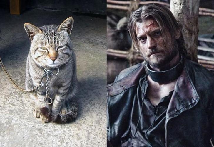 CatsofThrones07 «Игра престолов» в исполнении котов