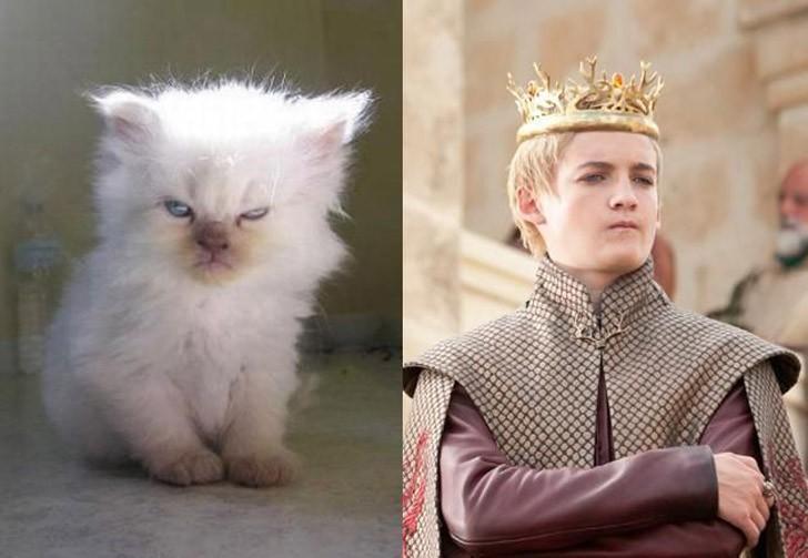 CatsofThrones08 «Игра престолов» в исполнении котов