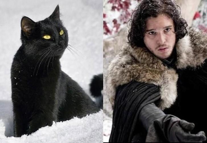 CatsofThrones09 «Игра престолов» в исполнении котов