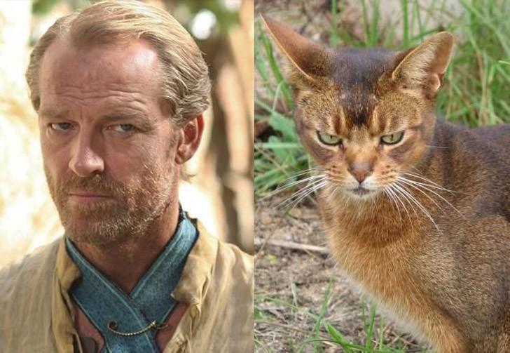 CatsofThrones10 «Игра престолов» в исполнении котов
