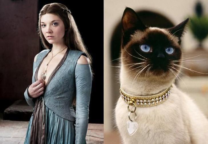 CatsofThrones11 «Игра престолов» в исполнении котов