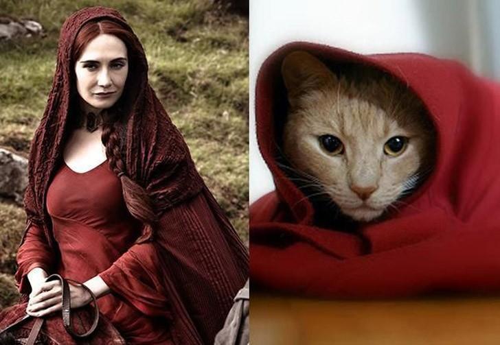 CatsofThrones12 «Игра престолов» в исполнении котов