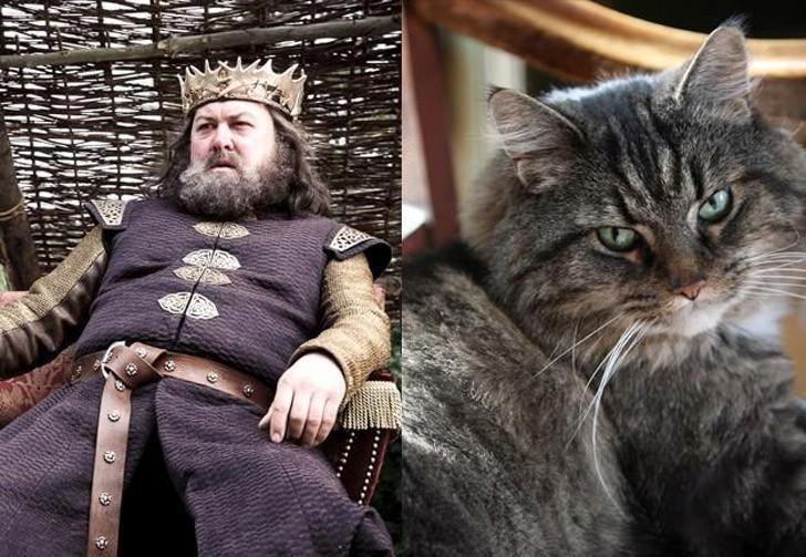 CatsofThrones13 «Игра престолов» в исполнении котов
