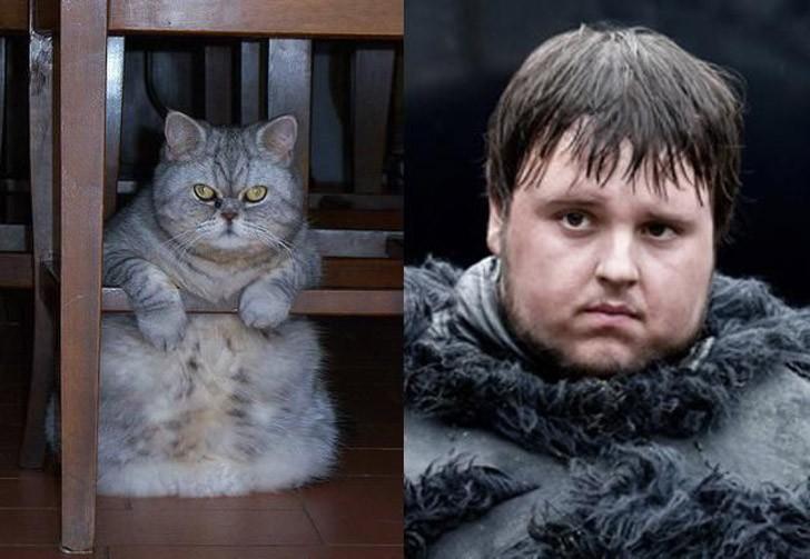 CatsofThrones14 «Игра престолов» в исполнении котов