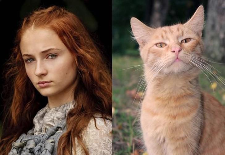 CatsofThrones15 «Игра престолов» в исполнении котов