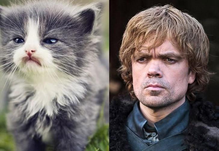 CatsofThrones16 «Игра престолов» в исполнении котов