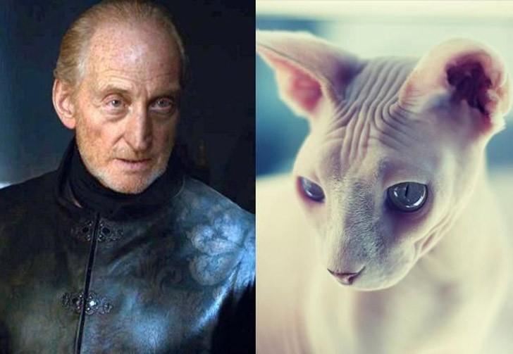 CatsofThrones17 «Игра престолов» в исполнении котов