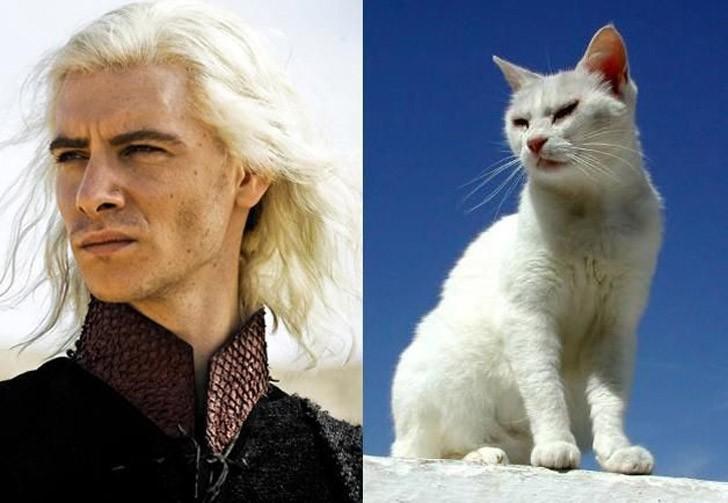 CatsofThrones18 «Игра престолов» в исполнении котов