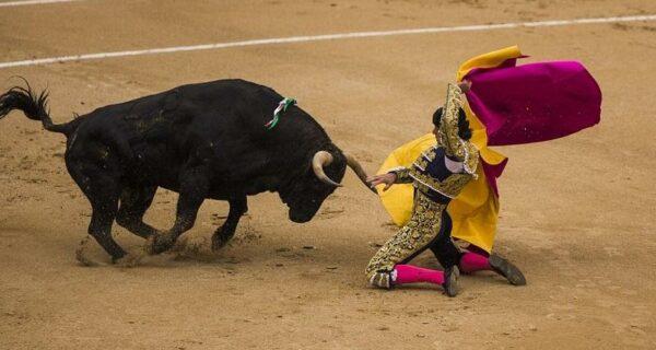 Испанские быки одержали историческую победу