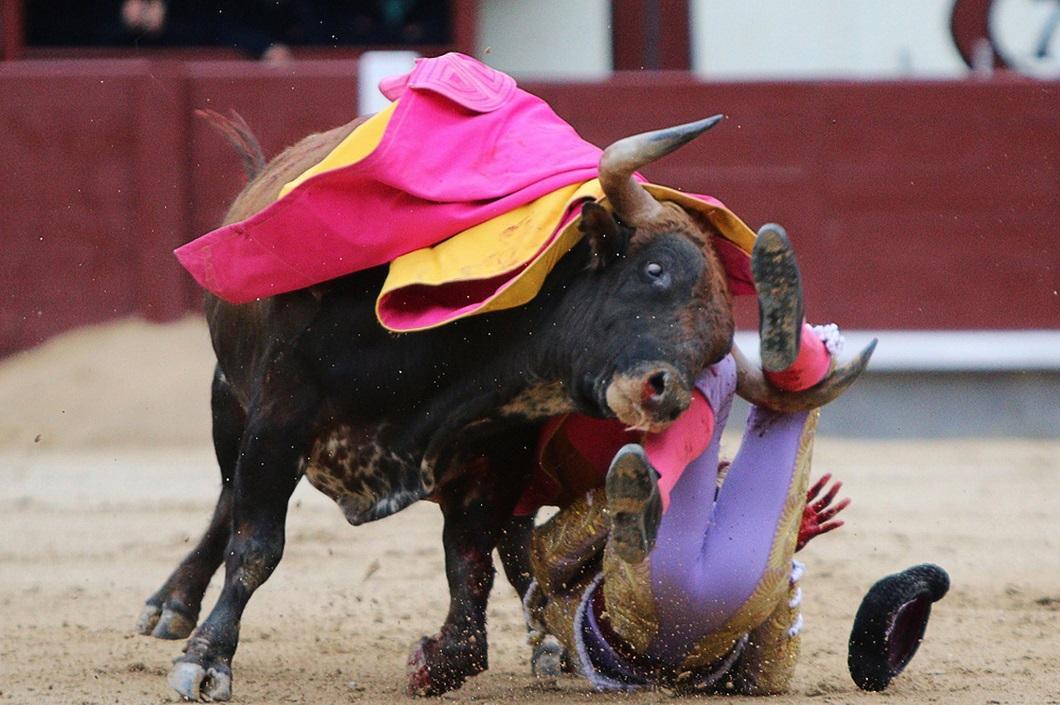 Быки картинки про быков