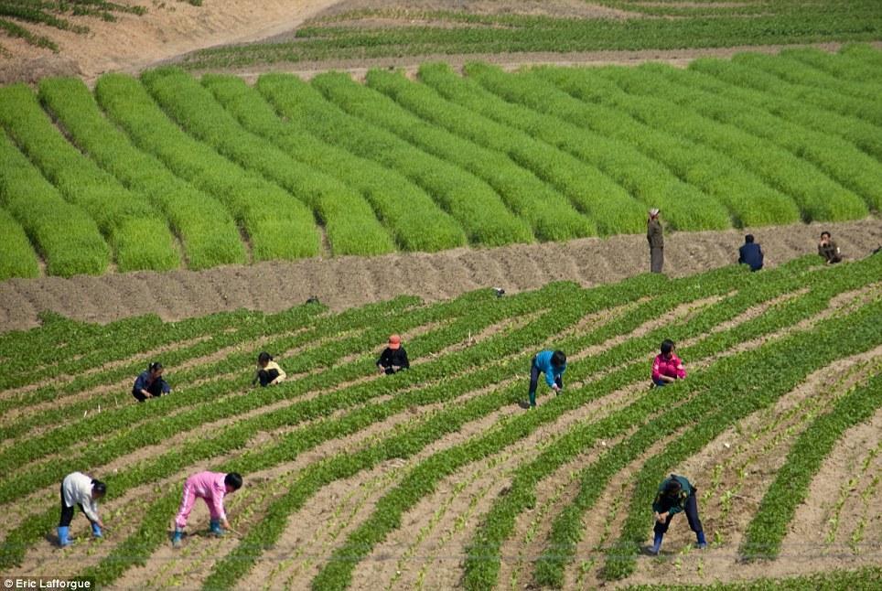 insideNorthKorea03 Запрещенные фотографии — Северная Корея, снятая скрытой камерой