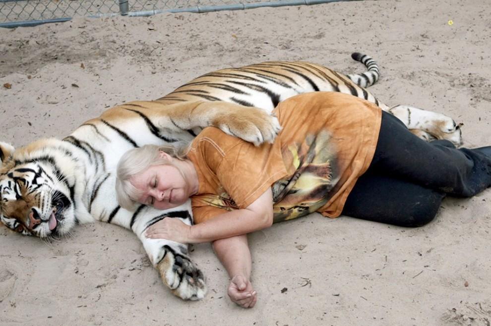 Если тигрица родила тигренка, такой сон предрекает покровительство от важного лица и семейное счастье.