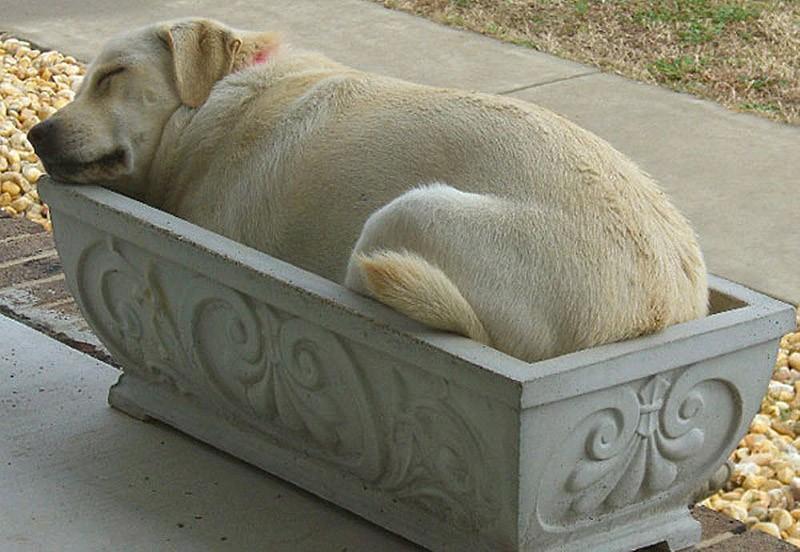 sleepydogs16 30 собак в самых невообразимых позах во сне