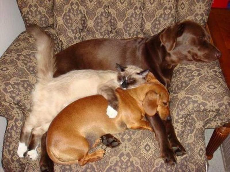 sleepydogs17 30 собак в самых невообразимых позах во сне