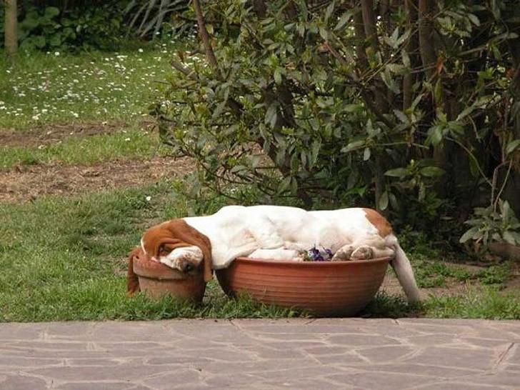 sleepydogs18 30 собак в самых невообразимых позах во сне