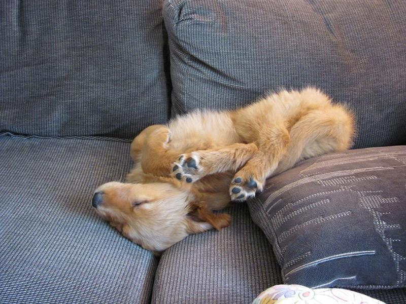 sleepydogs22 30 собак в самых невообразимых позах во сне