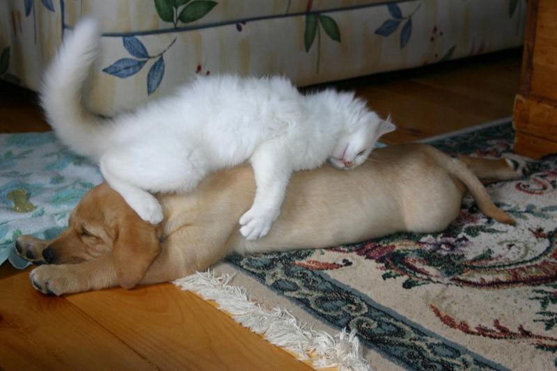 sleepydogs26 30 собак в самых невообразимых позах во сне
