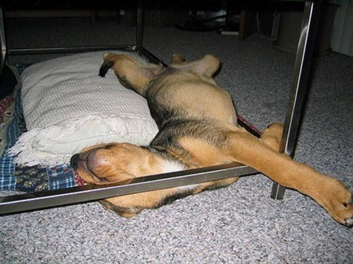 sleepydogs28 30 собак в самых невообразимых позах во сне