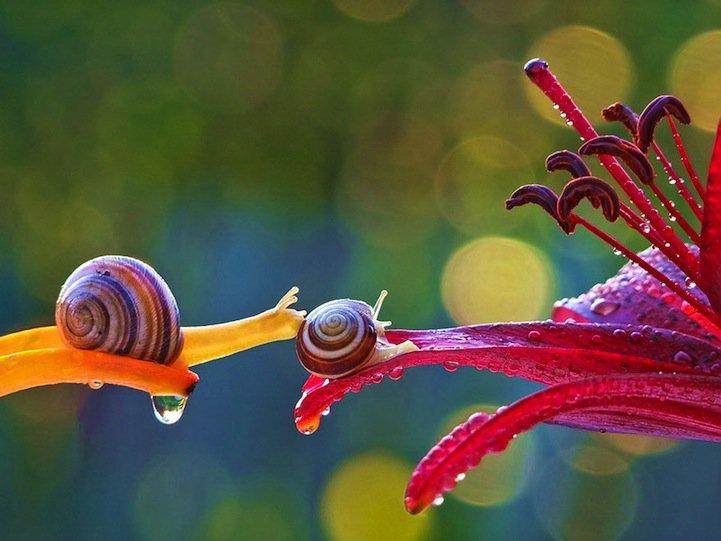 snails01 ������ ����� ������