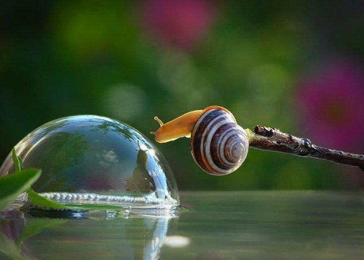 snails02.jpg