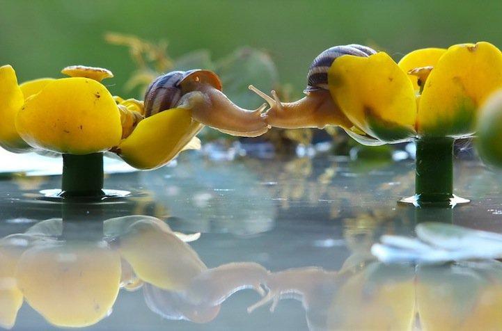 snails04.jpg