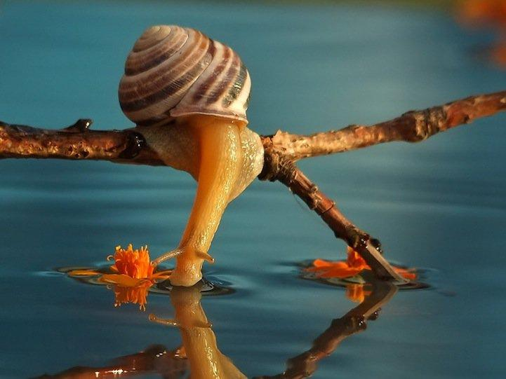 snails05.jpg