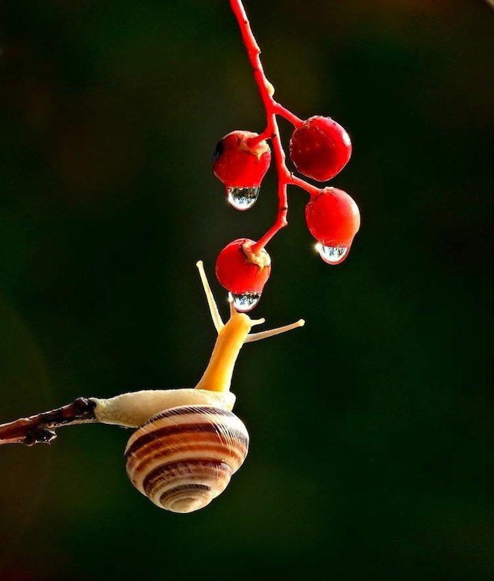 snails18.jpg