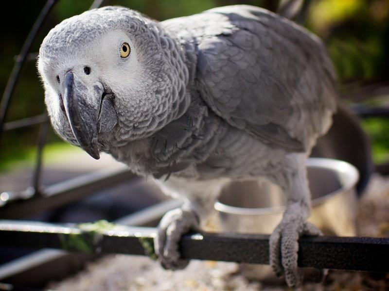 talkinganimals05 10 удивительных животных, которые умеют говорить