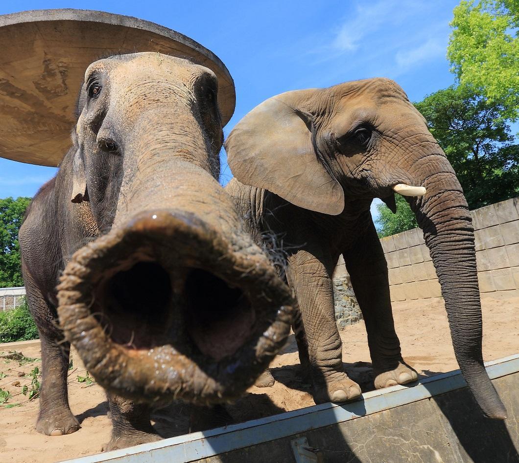 Пожеланиями доброго, смешная картинка слон