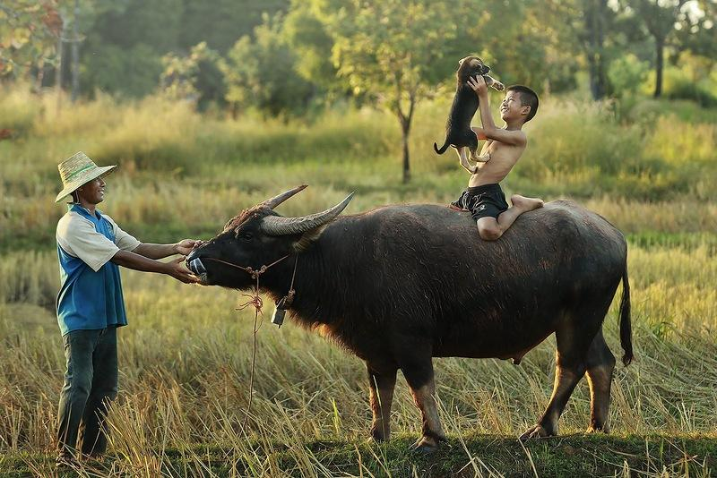 Whanset03 Сказочно красивый Таиланд в фотографиях Саравута Вансета