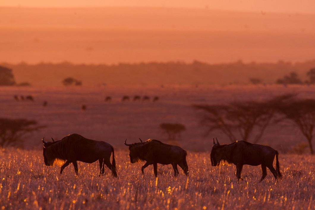http://bigpicture.ru/wp-content/uploads/2014/06/afrikanskie-zakaty-11.jpg