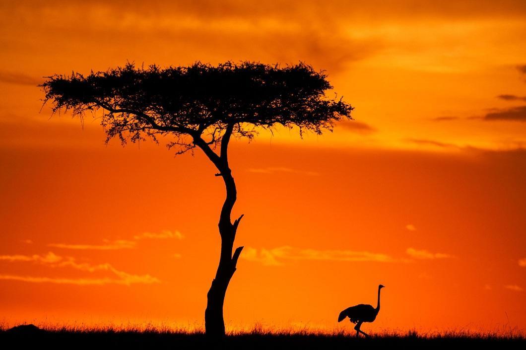 http://bigpicture.ru/wp-content/uploads/2014/06/afrikanskie-zakaty-12.jpg