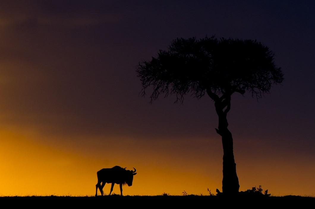 http://bigpicture.ru/wp-content/uploads/2014/06/afrikanskie-zakaty-14.jpg